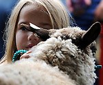 Lori Bacon, 7, of Columbia, looks on as a judge inspects her shetland sheep named Aster, during a competition called all other breeds, during the Hebron Home Fair, Saturday, Sept. 8, 2012, in Hebron. (Jim Michaud/Journal Inquirer)