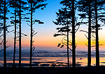 Olympic National Park, Washington:<br /> Ruby Beach - sunseet afterglow with silhouetted trees and surf reflections