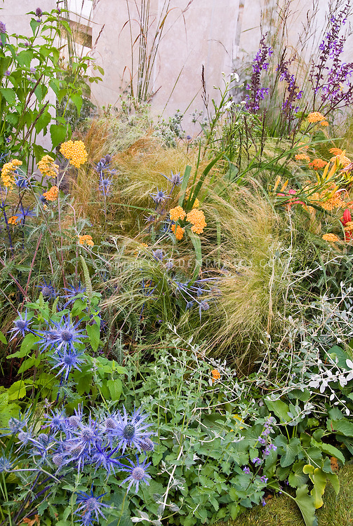 Blue and orange color theme garden plant flower stock for Spiky ornamental grass