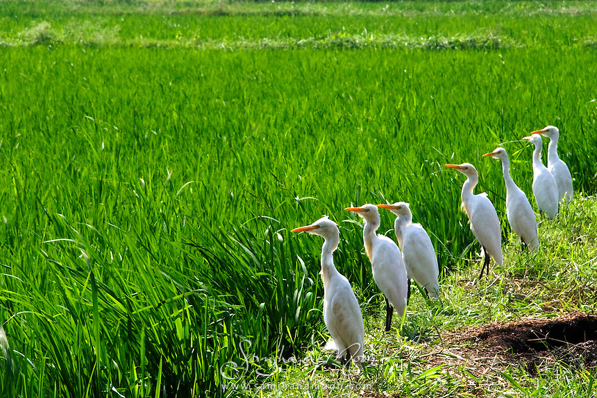 I loved this seven bird line up. Found it very amusing to see such patience and focus in these birds&quot;<br />