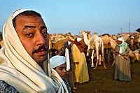 Camel trading, camel market, Cairo, Egypt
