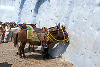 If you arrive at Santorini by sea you can take a cable car up from the port. But if you are adventurous, you can take a trip on one of the hundreds of mules or walk up the 588 zigzagging steps.
