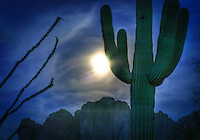 Full moon rise with Saguaro cactus - Arizona
