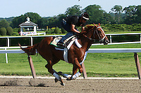 I'll Have Another and other Belmont Stakes contenders in morning workouts