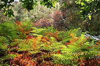 SEP 28 Autumn Colours @ RSPB Sandy Lodge
