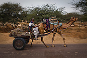 A camel cart walks past the NREGA site in Nakrasar village in Churu district in Rajasthan, India. Photo by Sanjit Das