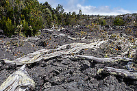 Trees destroyed by lava along Chain of Craters Road in Hawai'i Volcanoes National Park, Big Island.