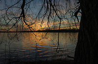 Sunset on lake behind the weeping willow at the lakes edge.