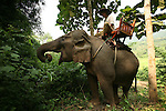 Cornac Khu et son elephant Buli pres de la cascade de Tat Kuang Si a  30 km au sud de la ville de Luang Prabang. Laos
