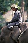 Elephant Handler, Bali