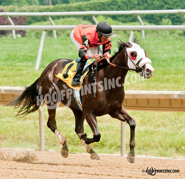Aplachee Star winning at Delaware Park on 6/26/13