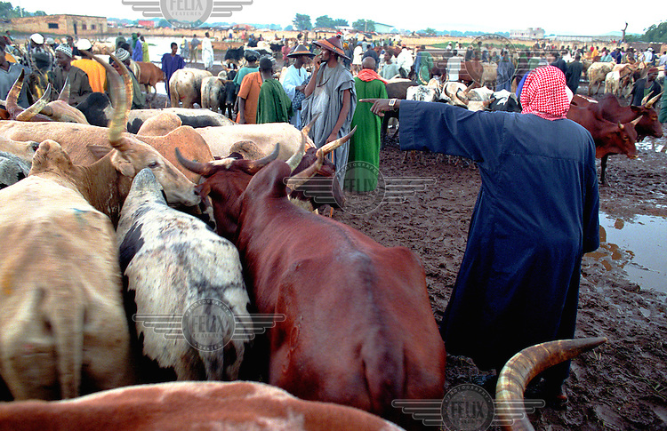 ©Crispin Hughes/Panos Pictures..MALI Bamako 2003...Cattle market