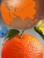 Produzione di arance esportate in tutto il mondo..Production of oranges exported worldwide.....