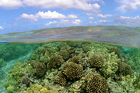 coral reef scenic, split image, Pociliopra meandrina, Porites lambata, Maro Reef, Papahanaumokuakea Marine National Monument, Northwestern Hawaiian Islands, Hawaii, USA, Pacific Ocean