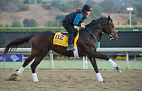 Ron the Greek , trained by Bill Mott, trains for the Breeders' Cup Classic at Santa Anita Park in Arcadia, California on October 30, 2013.