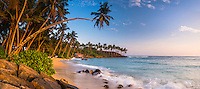Panoramic photo of a palm tree on Mirissa Beach, South Coast of Sri Lanka, Asia. This is a panoramic photo of a palm tree on Mirissa Beach, Sri Lanka, Asia. Mirissa Beach is a popular palm tree lined beach on the South Coast of Sri Lanka.