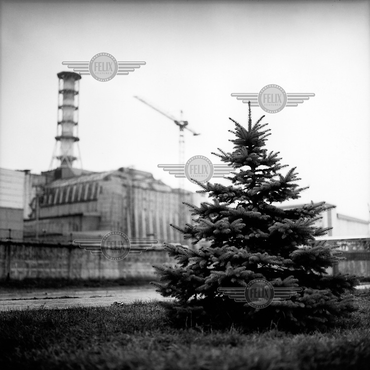 A pine tree growing outside the Chernobyl nuclear power plant. On 26th April 1986, a reactor at the Chernobyl nuclear power plant suffered a series of explosions which led to a nuclear meltdown. 28 people died from immediate radiation exposure from smoke released in the blast. The energy released dragged a plume of uranium dioxide and radioactive particles and gases high into the atmosphere which were scattered over a wide area by eddying atmospheric winds. A 30km evacuation zone was created around the reactor, displacing 135,000 local residents, many of whom have since returned to the region. Millions lived and continue to live in the contaminated area, also known as the zone of alienation.