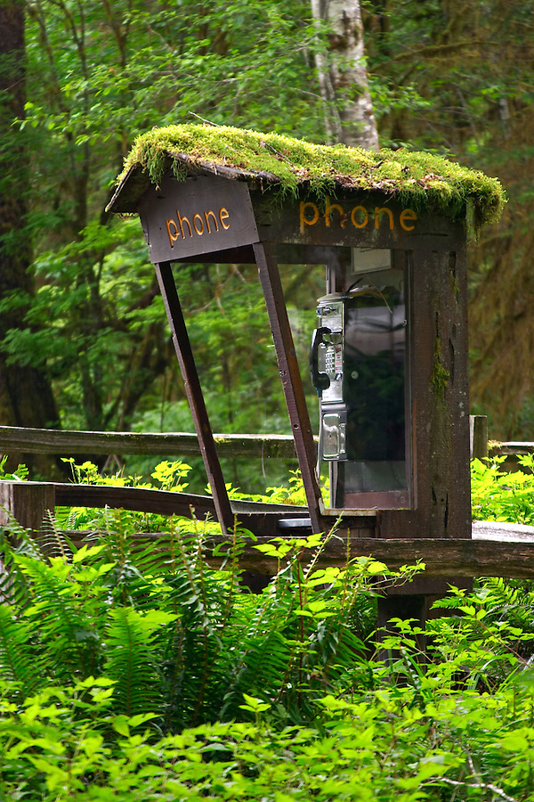 Moss coverred telephone booth, Hoh Rain Forest Visitor Center, Olympic National Park, Olympic Peninsula, Jefferson County, Washington, USA