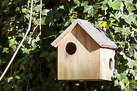 Nistkasten für Eichhörnchen, Eichhörnchen-Haus, Eichhörnchenhaus, Eichkätzchen, Eichkater, Sciurus vulgaris, Nesting box for squirrels, squirrel house