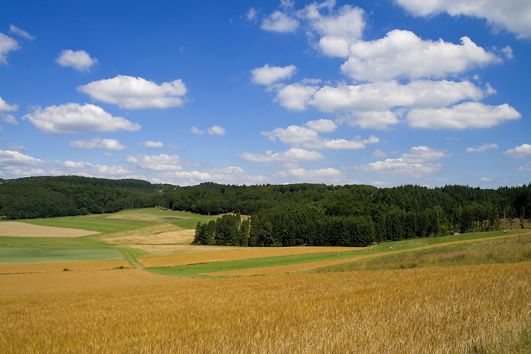 Europa, DEU, Deutschland, Rheinland Pfalz, Eifel, Vulkaneifel, Mehren, Agrarlandschaft, Getreide, Feld, Anbau, Himmel, Wolken, Cumuluswolken, Kategorien und Themen, Agrar, Landwirtschaft, Landwirtschaftlich, Landwirtschaftliche Produkte, Natur, Naturfoto, Naturfotos, Naturfotografie, Naturphoto, Naturphotographie, Landschaft, Landschaften, Landschaftsfoto, Landschaftsfotografie, Landschaftsphoto, Landschaftsphotographie......[Fuer die Nutzung gelten die jeweils gueltigen Allgemeinen Liefer-und Geschaeftsbedingungen. Nutzung nur gegen Verwendungsmeldung und Nachweis. Download der AGB unter http://www.image-box.com oder werden auf Anfrage zugesendet. Freigabe ist vorher erforderlich. Jede Nutzung des Fotos ist honorarpflichtig gemaess derzeit gueltiger MFM Liste - Kontakt, Uwe Schmid-Fotografie, Duisburg, Tel. (+49).2065.677997, ..archiv@image-box.com, www.image-box.com]