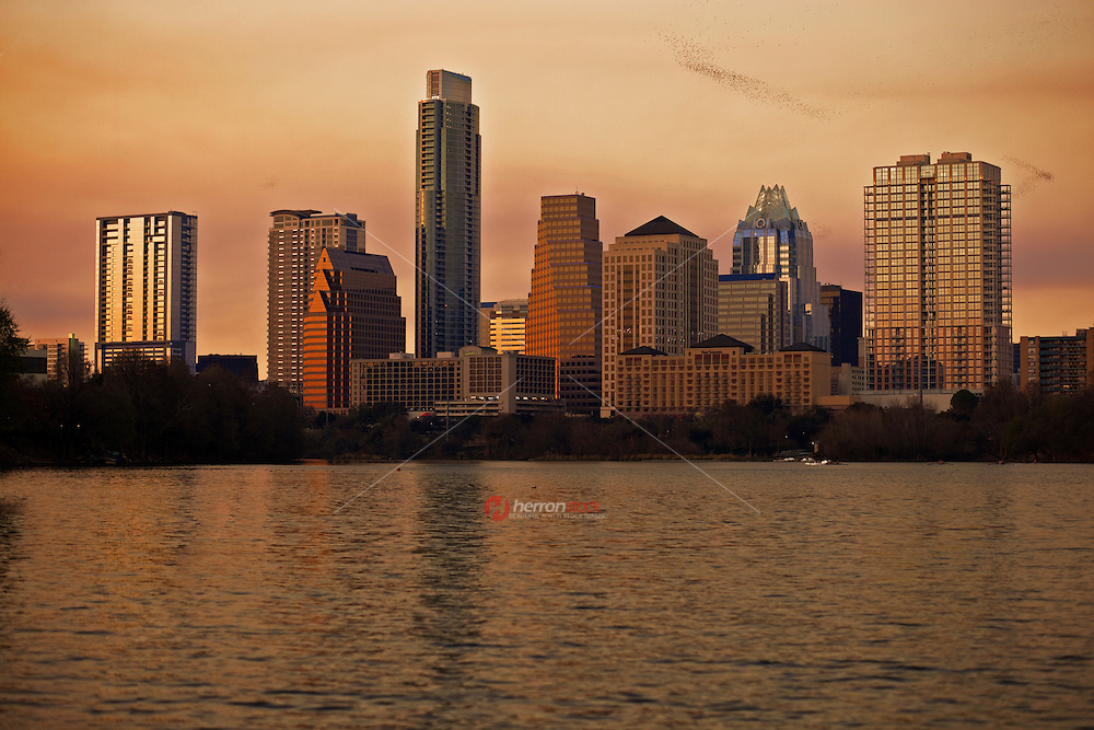 The Austin Cityscape soaks up the warm Texas Sunset as bird formations fly by.