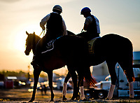 BALTIMORE, MD - MAY 18: Gunnevera heads to a busy track as preparations are in full swing for the Preakness Stakes this Saturday at Pimlico Race Course on May 18, 2017 in Baltimore, Maryland.(Photo by Scott Serio/Eclipse Sportswire/Getty Images)
