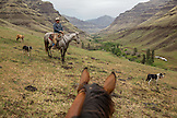 USA, Oregon, Joseph, Cowboy Todd Nash searches for his cattle up the Wild Horse Drainage above Big Sheep Creek