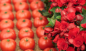 Sunday, 19 May 2013, London, UK. Planting and set-up work continues for the Chelsea Flower Show 2013 ahead of its opening next Tuesday. Pictured: floral display with tomatoes.
