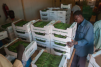Packaging of string beans production to european markets for exportation to european markets