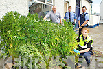 Garda Laura Cahill, and Detective Garda Mike Dalton, Garda Trevor Ryan and Garda Conor Farrell with the €80,000 cannabis haul they recovered from a house in Killarney on Sunday evening