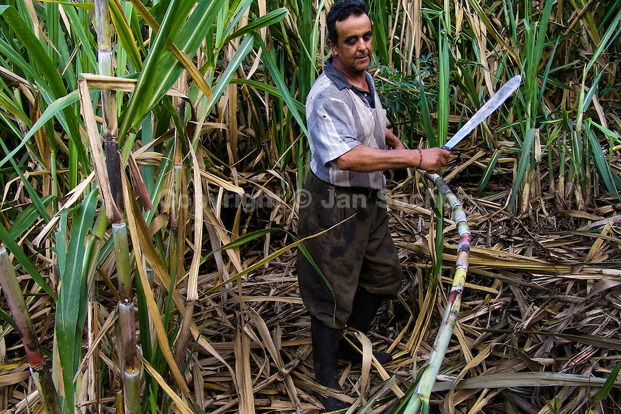 A Colombian peasant cuts sugar cane in a field before processing of panela in a rural sugar cane mill (trapiche) in San Agustín, Colombia, 18 April 2004. Panela, a solid block of raw, unrefined sugar, is made by cooking and evaporation of the sugar cane juice into a golden, sticky syrup which is then poured into the wooden molds and allowed to solidify. Having the taste like a cross between molasses and brown sugar, panela is served as a hot or cold infusion (aguapanela). Due to the large amounts of proteins, vitamins and minerals and thus, panela is believed to have healing powers. Cheaper than sugar, it is consumed by the majority of Colombians and it is a major source of calories for children from families with low socioeconomic status. With more than 70,000 farms that cultivate sugarcane for mills, panela production is an important economic activity in the Colombian countryside, employing around 350,000 people and being the second largest source of jobs after agricultural coffee production.
