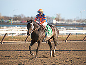 Mike Repole's Calibrachoa continued his winning ways by taking the Tom Fool Stakes at Aqueduct on March 3.