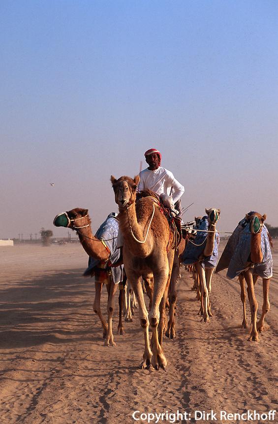 Vereinigte arabische Emirate (VAE, UAE),  bei Duba, Rennkamele beim Training