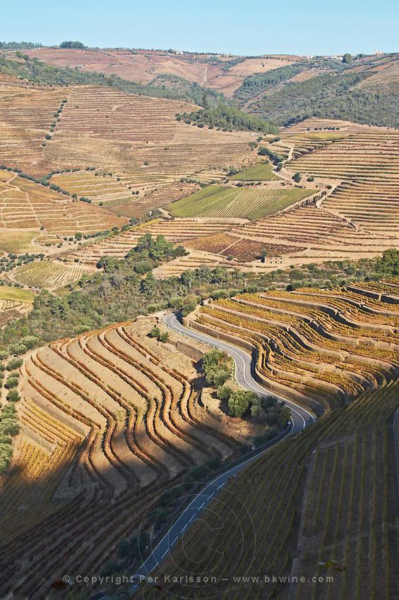 vineyards winding road quinta do noval douro portugal