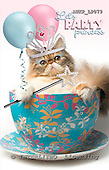 Samantha, ANIMALS,  photos,+cats,++++,AUKPLP079,#A# Humor, lustig, divertido