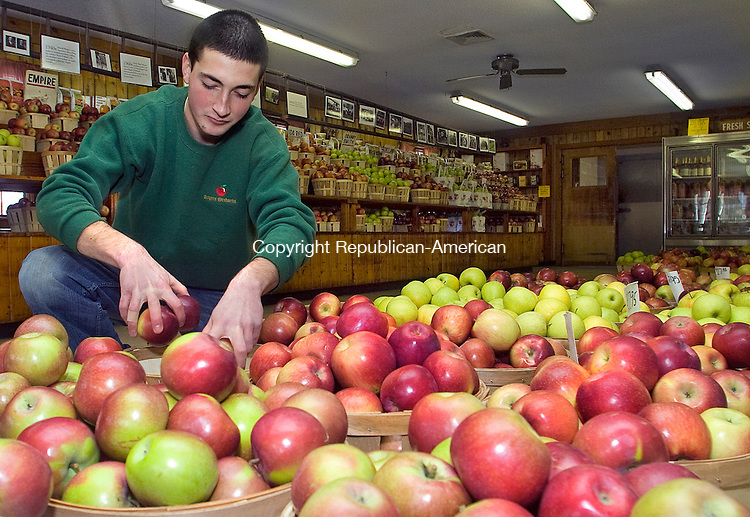 SOUTHINGTON CT.-09 NOVEMBER 2010 110910DA01-  Jonny Saxton of Prospect fills baskets with fresh apples to be sold at Rogers Orchards in Southington Tuesday. The orchard features in November, farm baked pies, apple cider donuts, fresh sweet cider, and Thanksgiving fruit baskets, pies and holiday decorations.Fragrant Apple Firewood <br /> Darlene Douty Republican-American