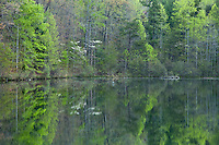 Spring forest reflection in Lake Oolenoy, Table Rock State Park
