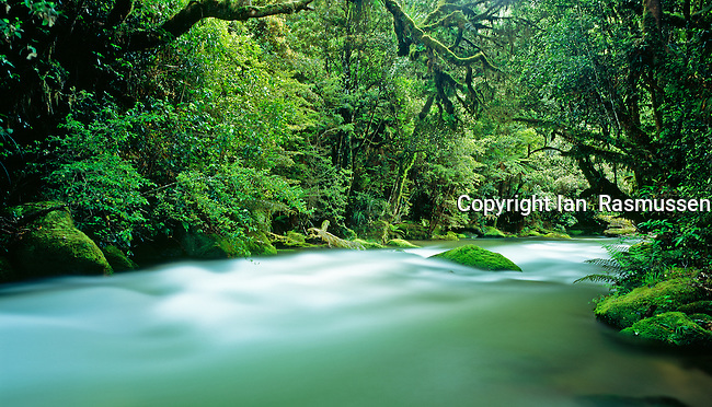 Whirinaki River,a beautiful free flowing river in stunning virgin rainforest located North Island of New Zealand