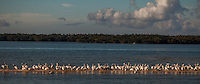 Keep All Your Birds in A Row