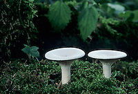 Mushroom, Oberaegeri, Switzerland, September 1995