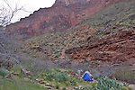Arizona, Grand Canyon, Grand Canyon National Park, Hermit Trail, Hermit Creek campsite, campers, Southwest, U.S.A.,