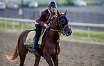 June 7, 2019 : Master Fencer gallops on the training track as horses prepare for the Belmont Stakes on Belmont Stakes Festival Weekend at Belmont Park in Elmont, New York. John Voorhees/Eclipse Sportswire/CSM
