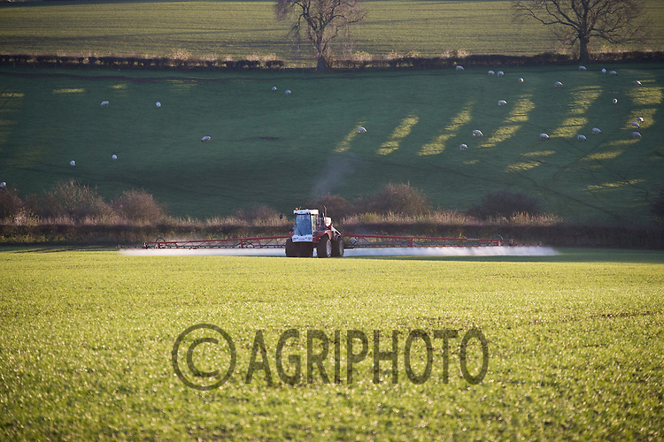 15.11.2010 Spraying Wheat in the late Winter Sun.Tim Scrivener,Vine Cottage,Barholm,Stamford,.Lincolnshire,PE9 4RA