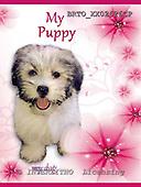 Alfredo, ANIMALS, dogs, photos+++++,BRTOXX02626CP,#a# Hunde, perros