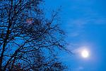 Europa, DEU, Deutschland, Nordrhein Westfalen, NRW, Rheinland, Niederrhein, Toenisberg, Schaephuysener Hoehen, Abendstimmung, Daemmerung, Baeume, Zweige, Aeste, Mond, Vollmond, Kategorien und Themen, Natur, Umwelt, Landschaft, Jahreszeiten, Stimmungen, Landschaftsfotografie, Landschaften, Landschaftsphoto, Landschaftsphotographie, Wetter, Wetterelemente, Wetterlage, Wetterkunde, Witterung, Witterungsbedingungen, Wettererscheinungen, Meteorologie, Wettervorhersage....[Fuer die Nutzung gelten die jeweils gueltigen Allgemeinen Liefer-und Geschaeftsbedingungen. Nutzung nur gegen Verwendungsmeldung und Nachweis. Download der AGB unter http://www.image-box.com oder werden auf Anfrage zugesendet. Freigabe ist vorher erforderlich. Jede Nutzung des Fotos ist honorarpflichtig gemaess derzeit gueltiger MFM Liste - Kontakt, Uwe Schmid-Fotografie, Duisburg, Tel. (+49).2065.677997, ..archiv@image-box.com, www.image-box.com]