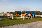 August 15, 2017; On Day 2 of the ND Trail, pilgrims stop to say hello to horses while making the 39 mile trek, 18 walking and 21 biking on the ND Trail from Oaktown to Pimento, Indiana. As part of the University's 175th anniversary celebration, the Notre Dame Trail will commemorate Father Sorin and the Holy Cross Brothers' journey. A small group of pilgrims will make the entire 300+ mile journey from Vincennes to Notre Dame over  two weeks. (Photo by Barbara Johnston/University of Notre Dame)