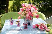 Helga, FLOWERS, nature  photos, DTTH1097-,#F# Blumen, Natur, flores, naturaleza