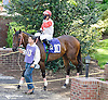 Action Andy before The Hockessin Stakes at Delaware Park racetrack on 6/18/14