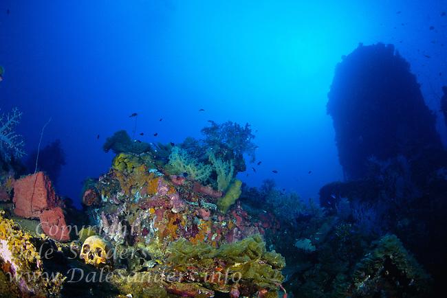 Human Skulls on the WW2 wreck of Aikoku Maru, Chuuk (Truk) Lagoon, Micronesia