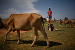 Cow farmer's son in Mui Ne.